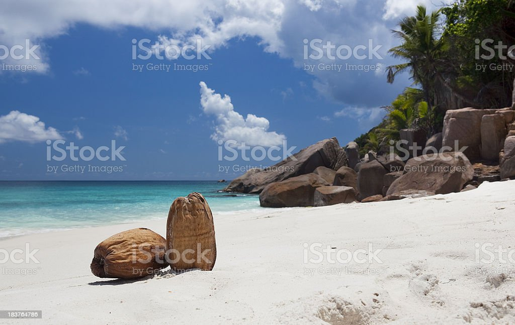 Coconuts on beautiful tropical beach royalty-free stock photo