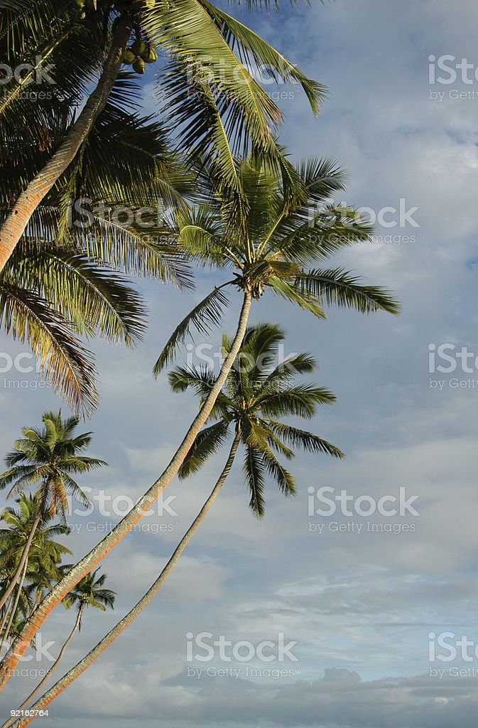 coconuts tree with blue sky royalty-free stock photo