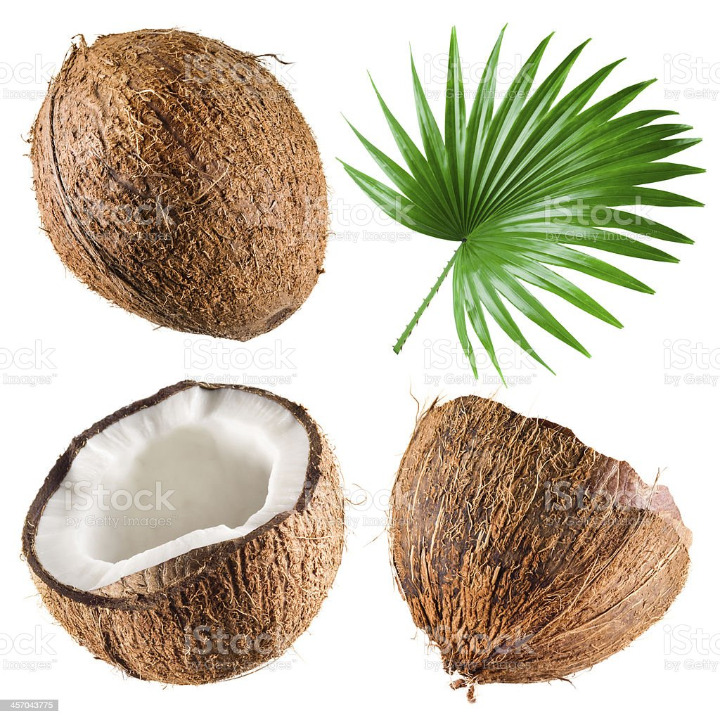 Coconuts with palm leaf on white background. Collection stock photo
