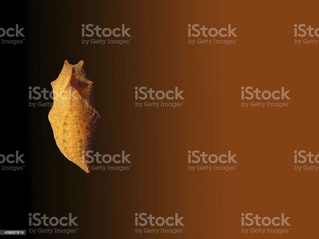 Cocoon of butterfly on brown background stock photo