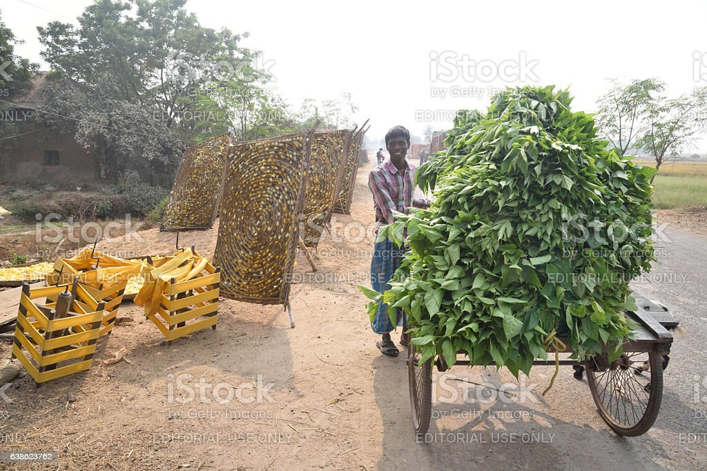 cocoon silk industry Murshidabad, stock photo