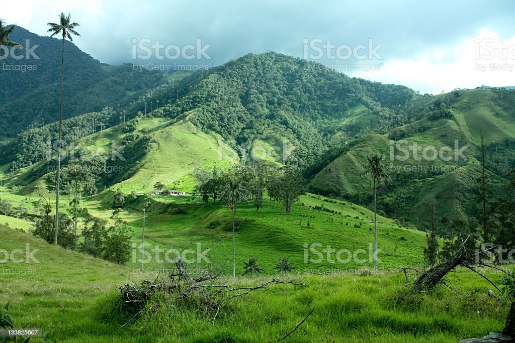 Cocora valley and the palm. Colombia royalty-free stock photo