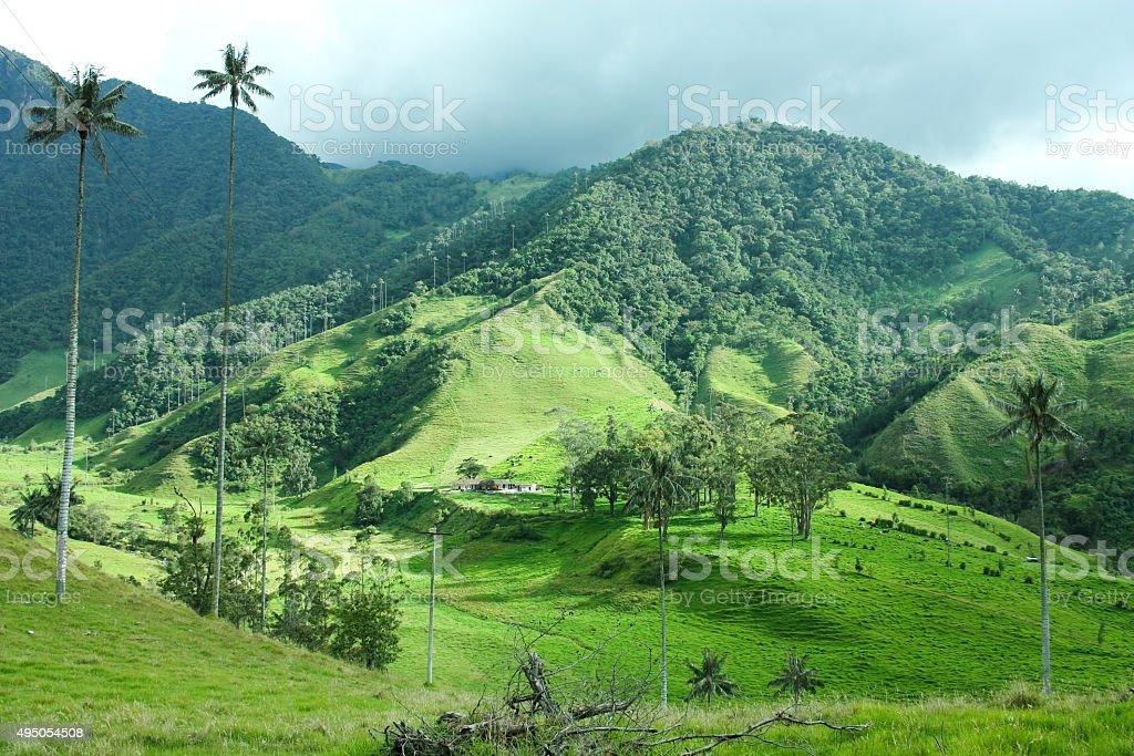 Cocora valley. stock photo
