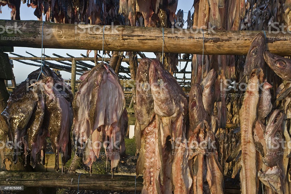 Cod drying in Iceland stock photo