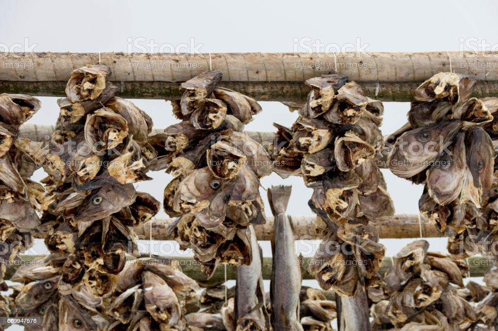 Cod Fish stock photo