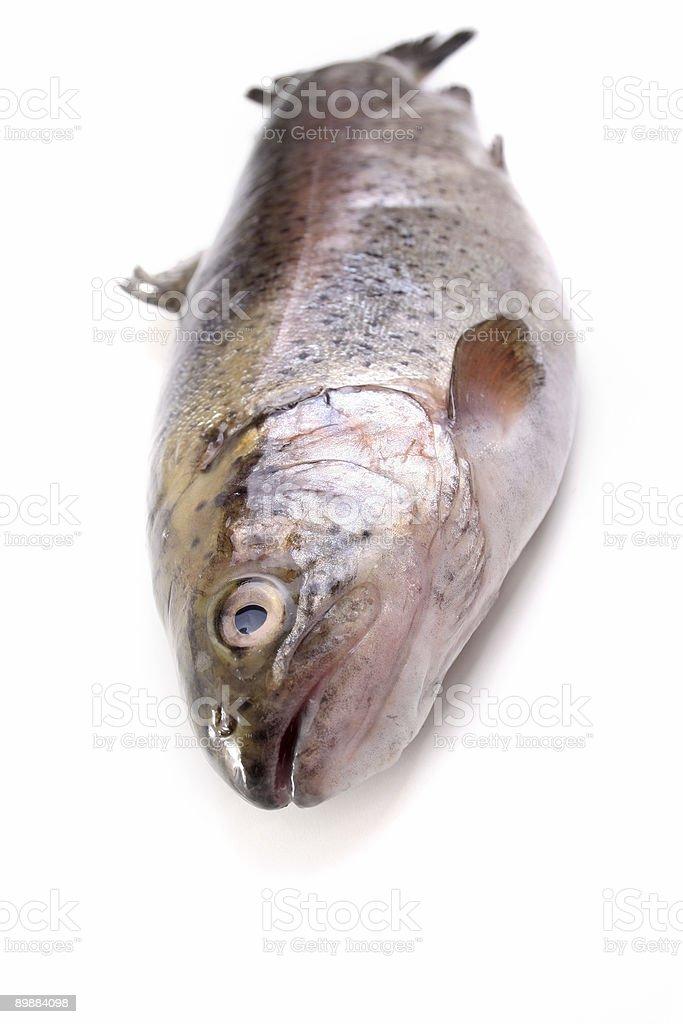 Cod fish royalty-free stock photo