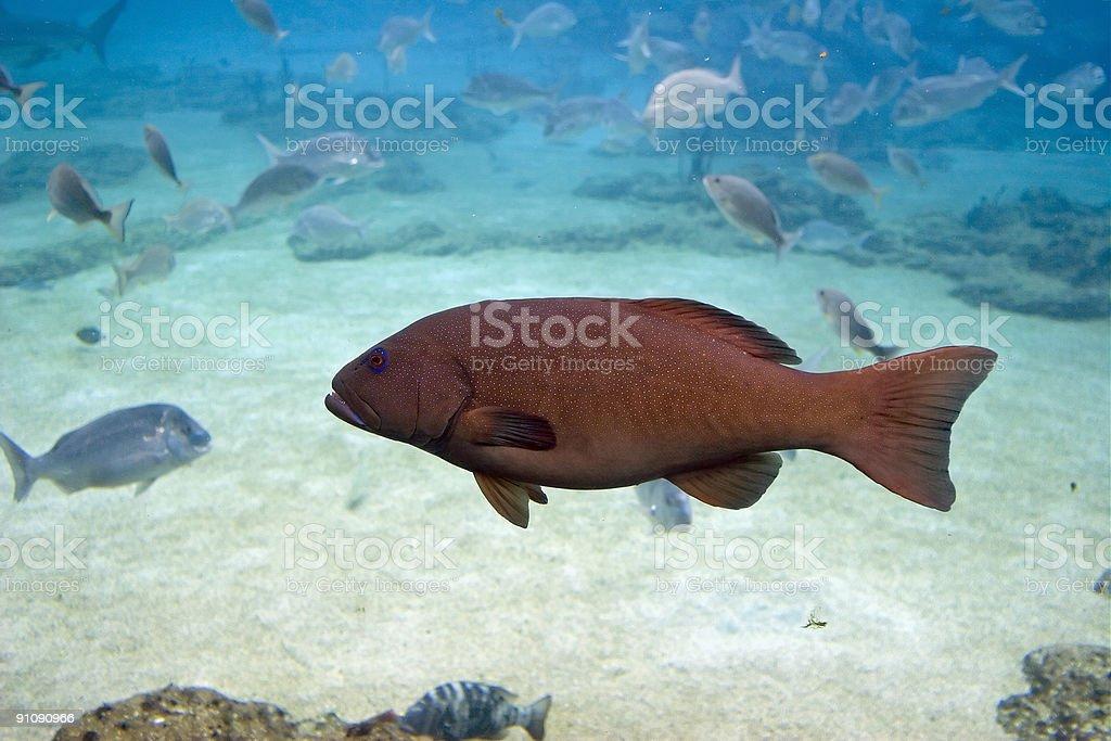 Cod stock photo
