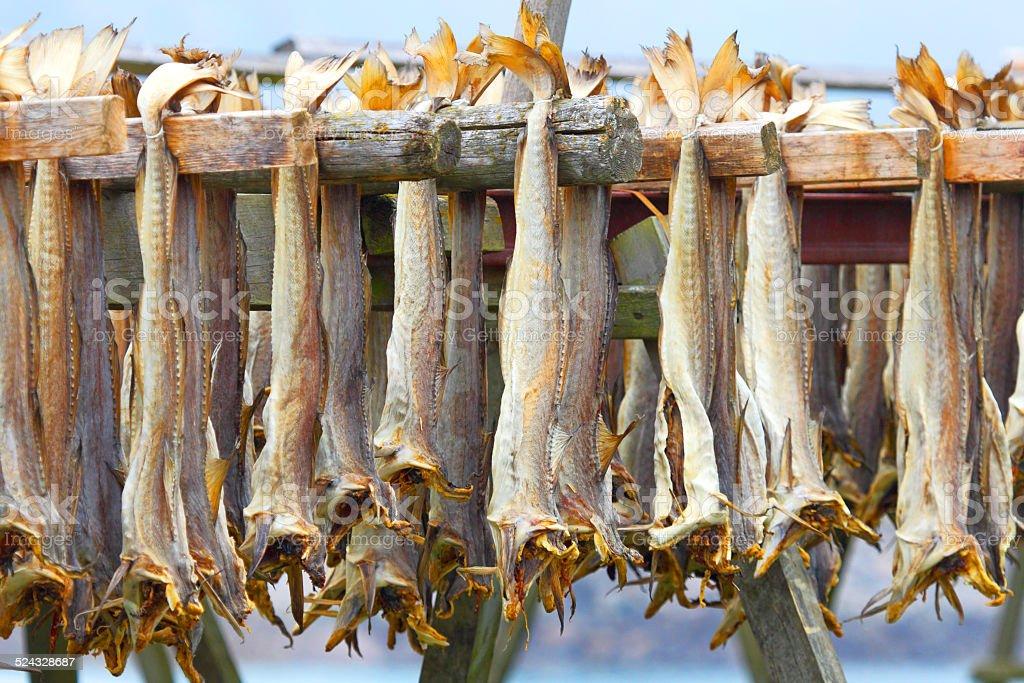 Cod stockfish.Industrial fishing in Norway stock photo