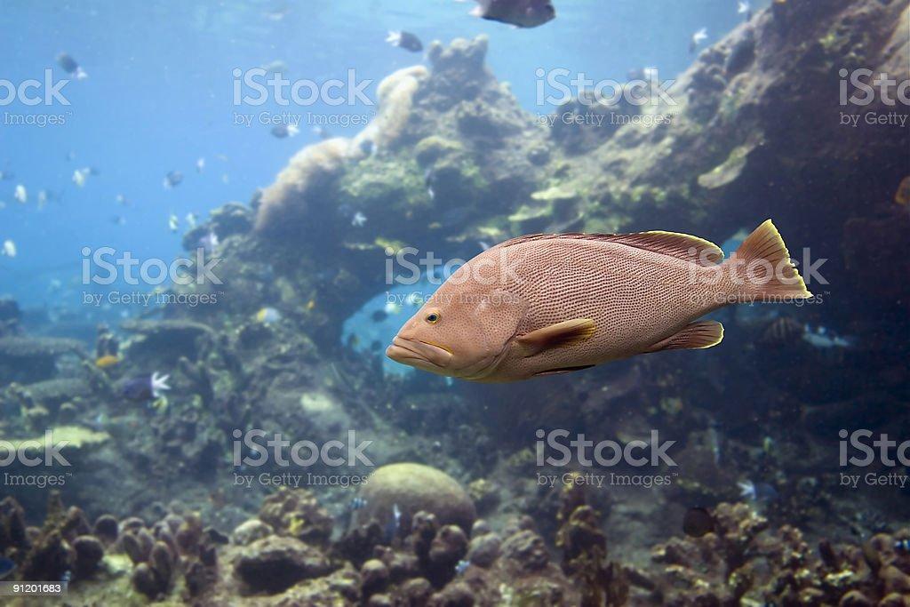 Coddfish stock photo