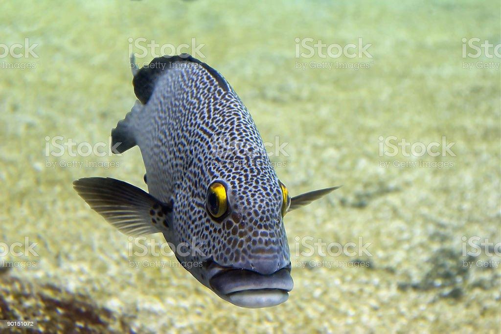 Coddfishl stock photo