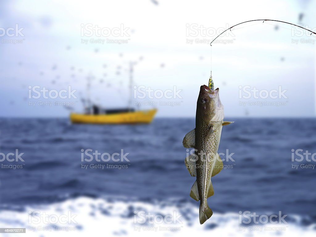 codfish royalty-free stock photo