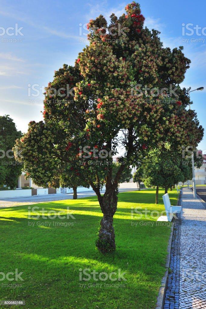 Codsta Nova resort, Portugal stock photo