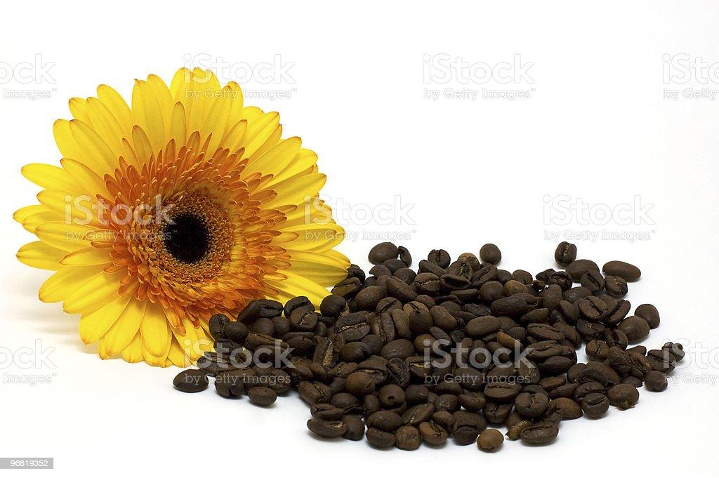 Grains de café et de Marguerite photo libre de droits