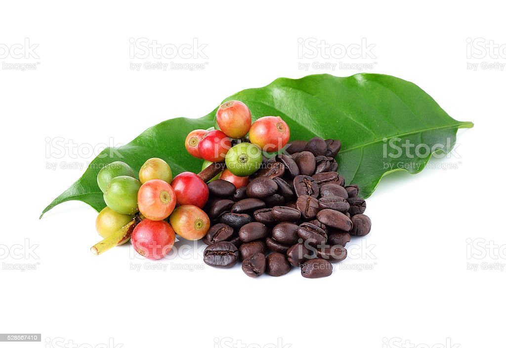coffee beans and ripe coffee isolated on white background. stock photo