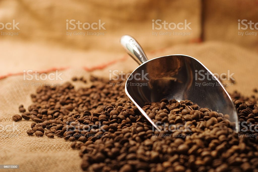 Coffee Beans And Scoop on Burlap Sack royalty-free stock photo