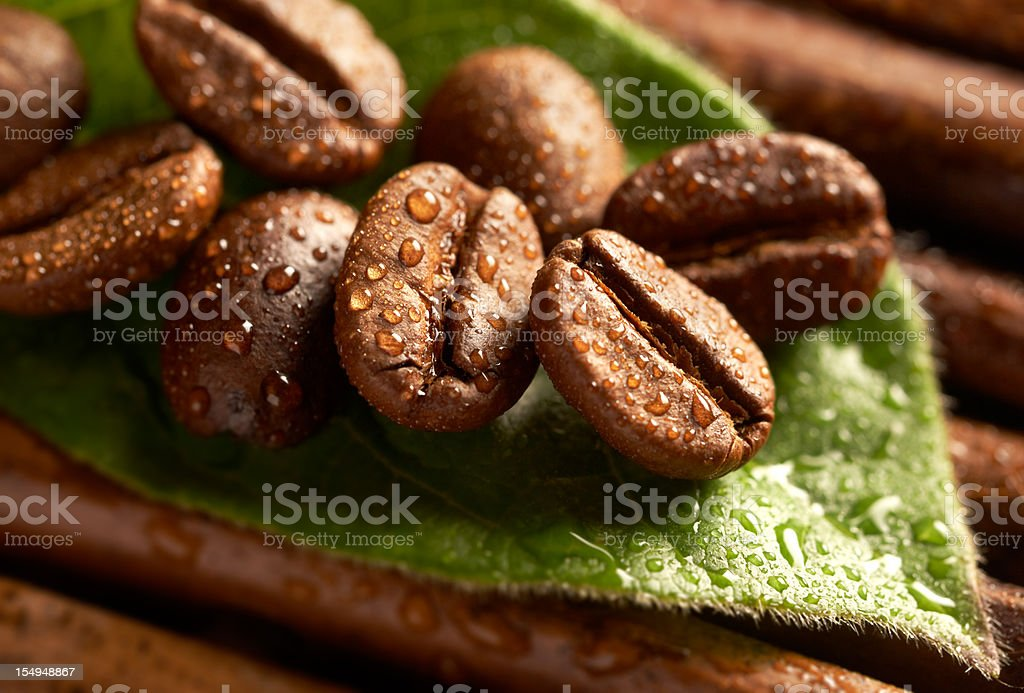 Coffee beans covered in rain drops on top of leaf  royalty-free stock photo