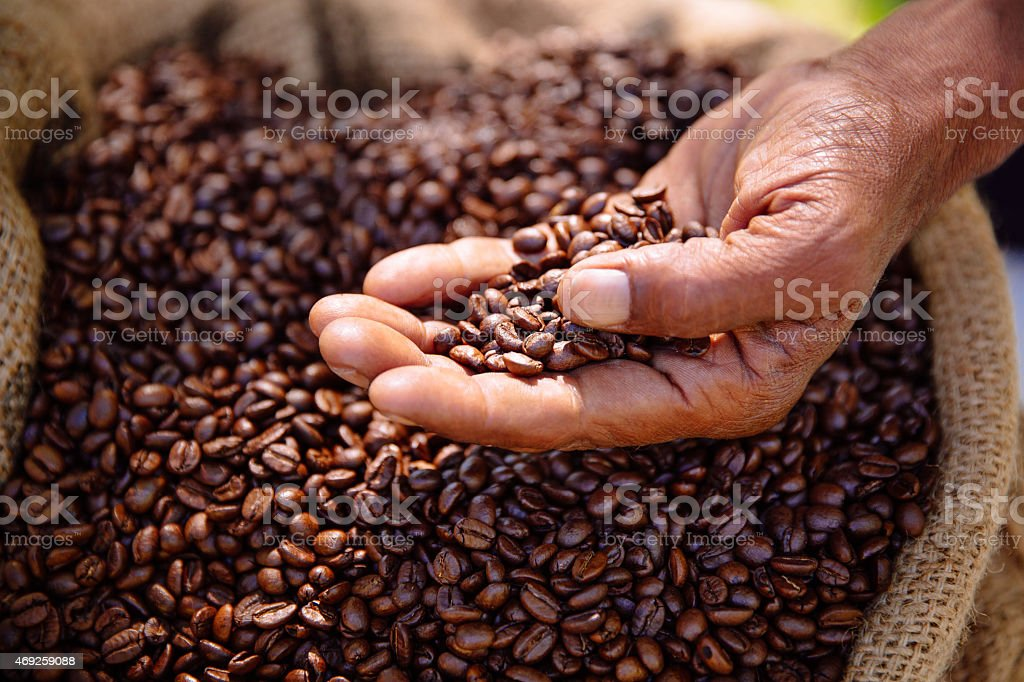 Coffee beans freshly roasted, aromatic and healthy stock photo