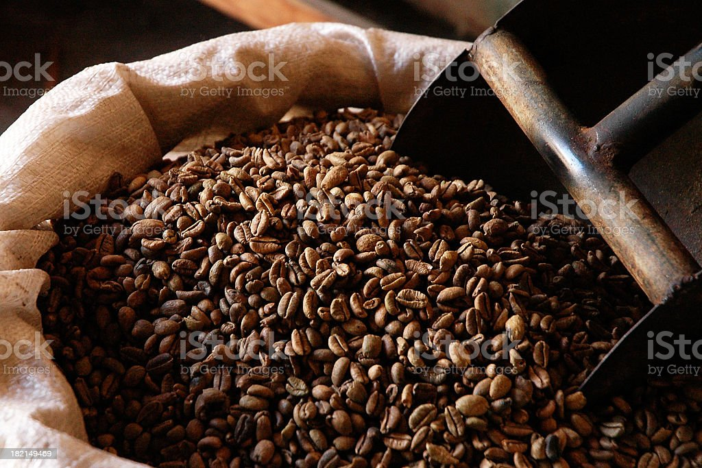 Coffee Beans In An Open Burlap Sack royalty-free stock photo