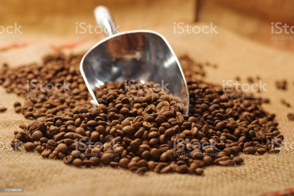 Coffee beans on burlap sack with metal scoop royalty-free stock photo