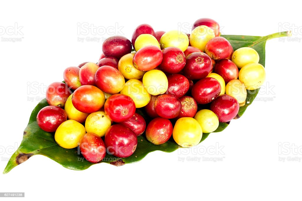 coffee beans on green leaf. stock photo
