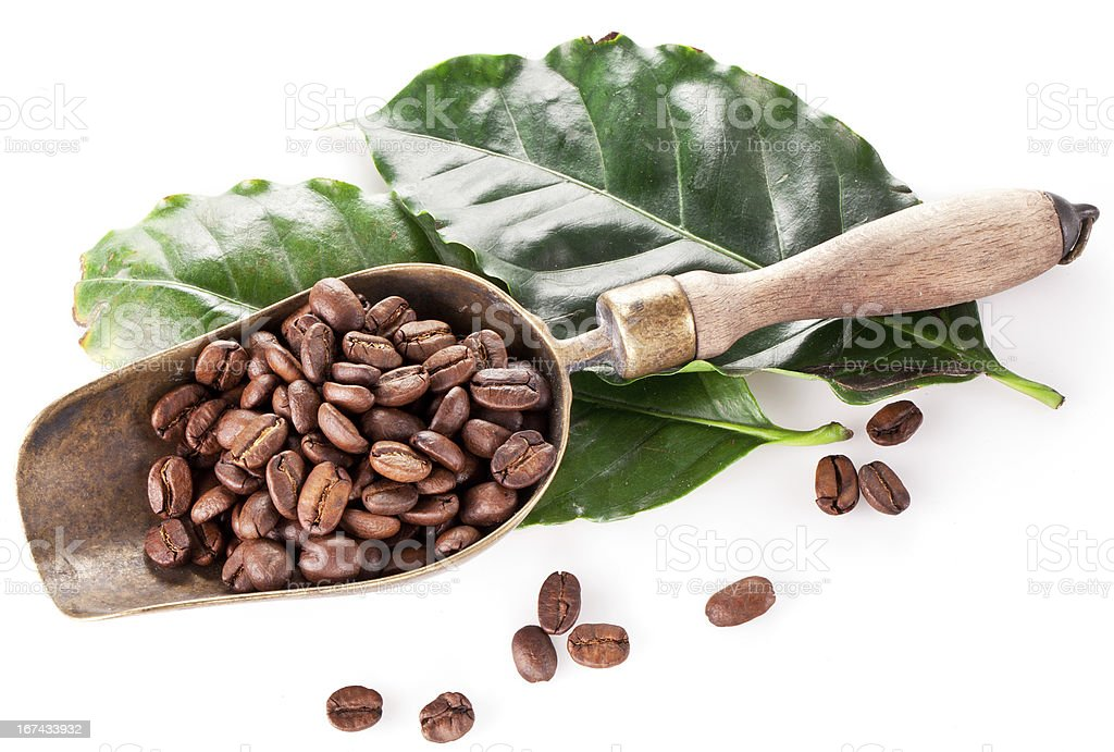 Coffee beans on scoop and leaves. royalty-free stock photo