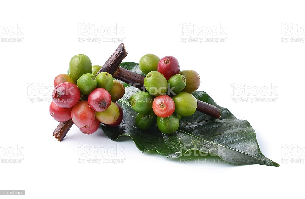 coffee beans on white background. stock photo