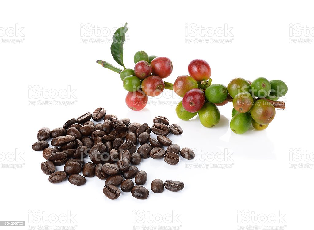 coffee berry and coffee beans on white background stock photo