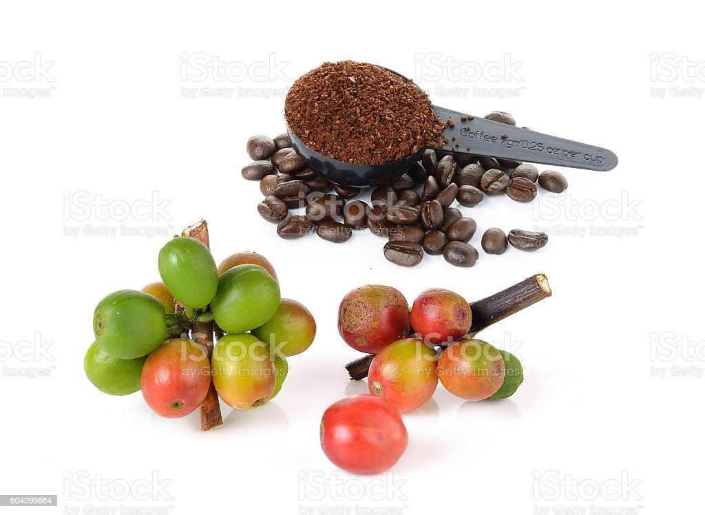 coffee berry and coffee powder on white stock photo
