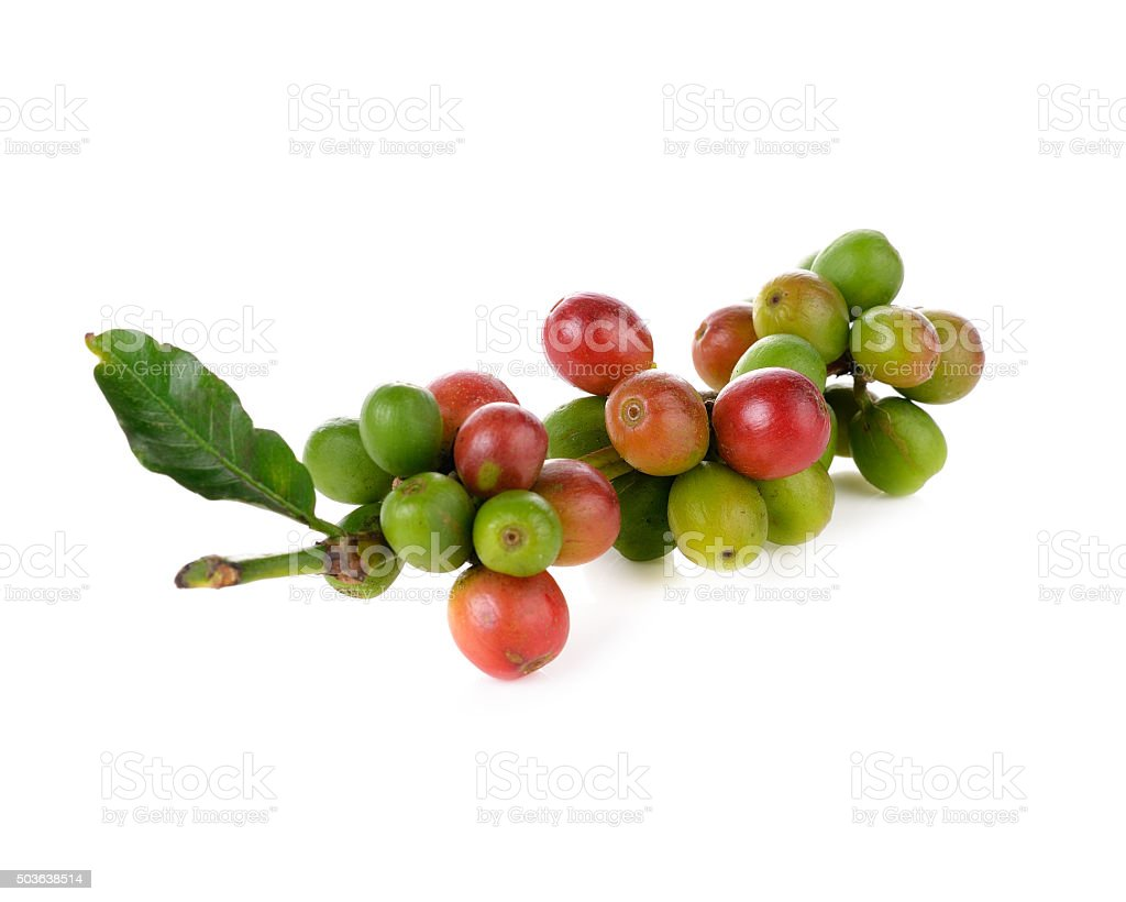 Coffee cherry isolate on white background stock photo
