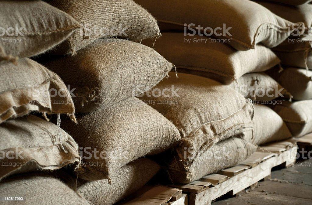 coffee crop royalty-free stock photo