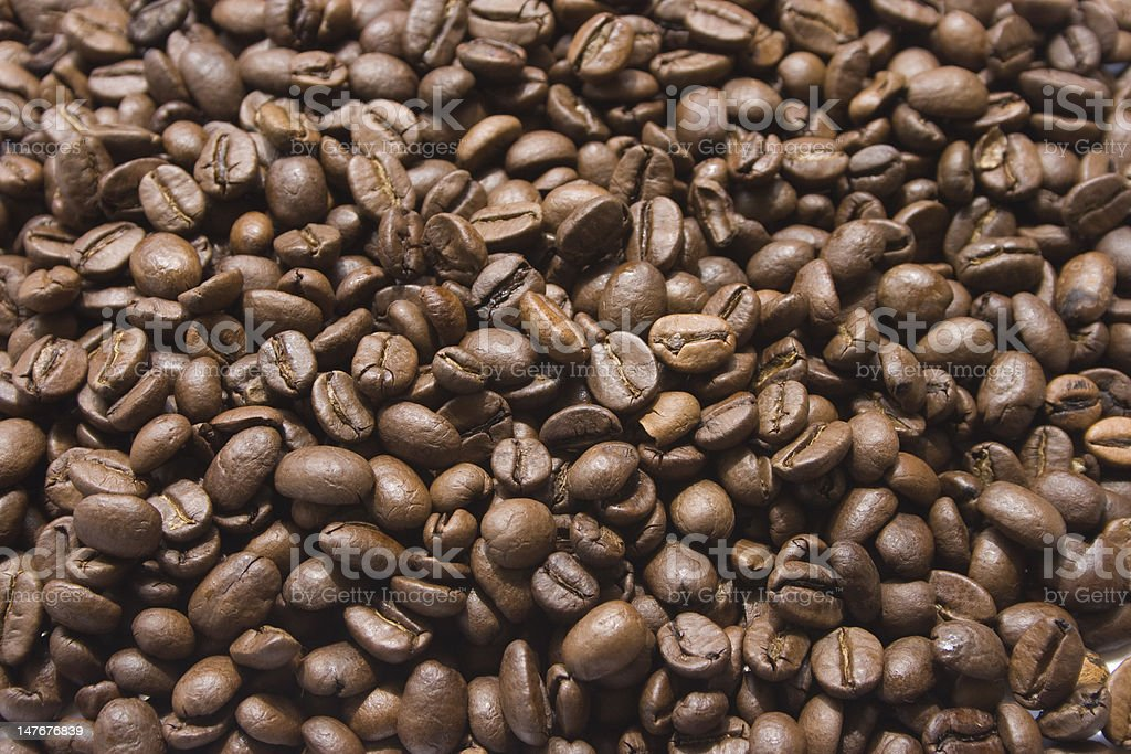 Coffee crops royalty-free stock photo