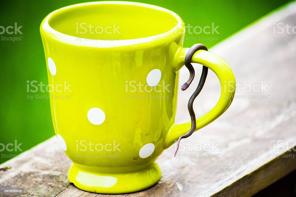 coffee cup and small snake royalty-free stock photo