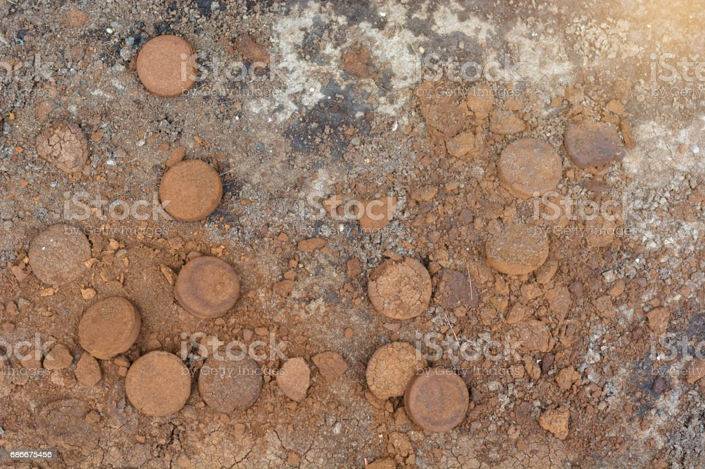Coffee ground, coffee residue on ground were applied to fertilizers stock photo