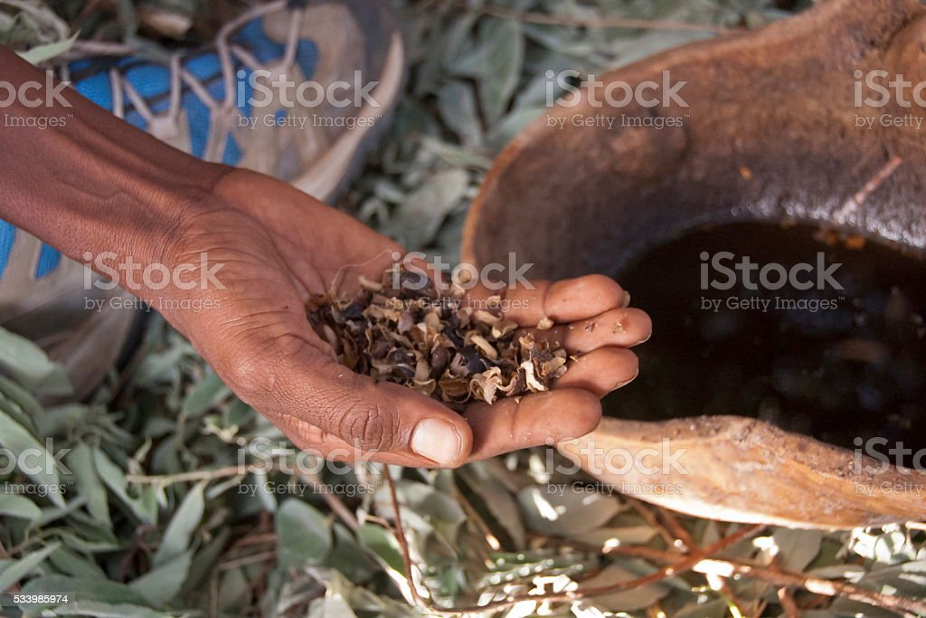 Coffee husks used for making coffee, Valley Omo, Ethiopia. stock photo