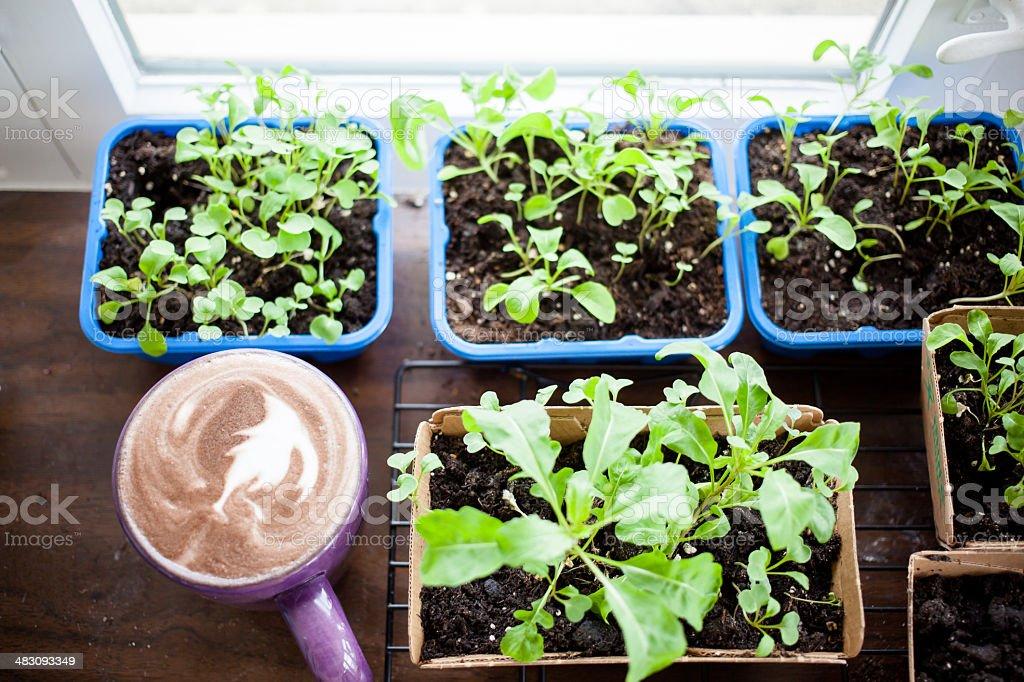 Coffee mug with drink near plants royalty-free stock photo