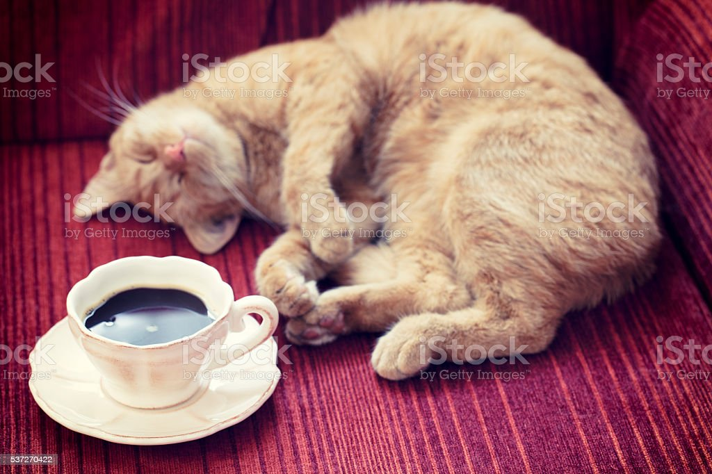 Coffee on Sofa with Cat stock photo