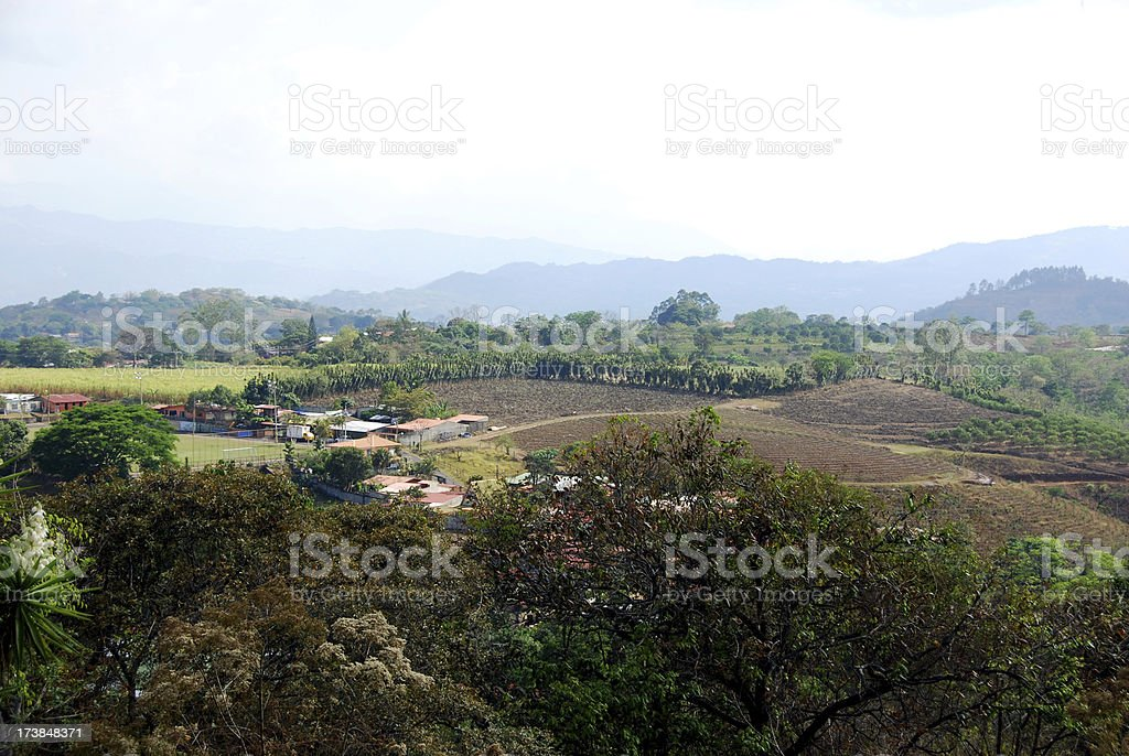 Coffee Plantation in Central Costa Rica royalty-free stock photo