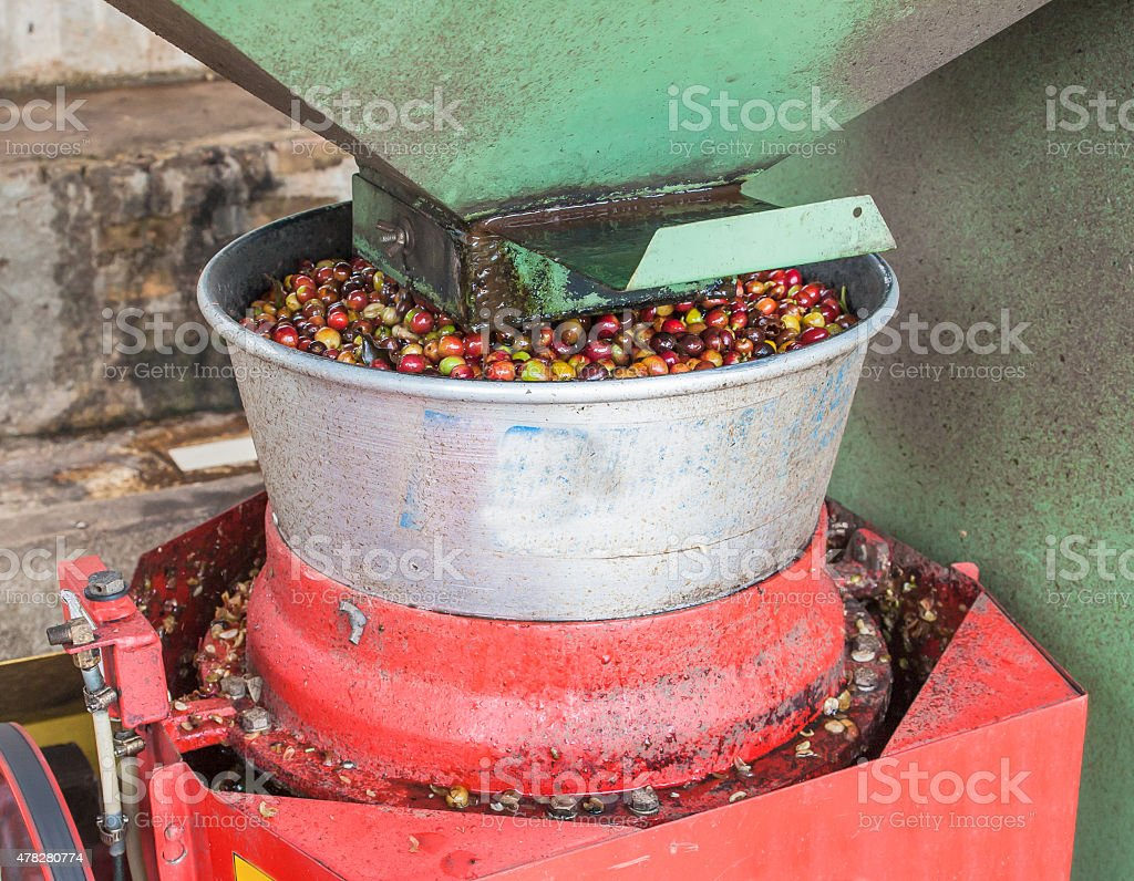 coffee pulping stock photo
