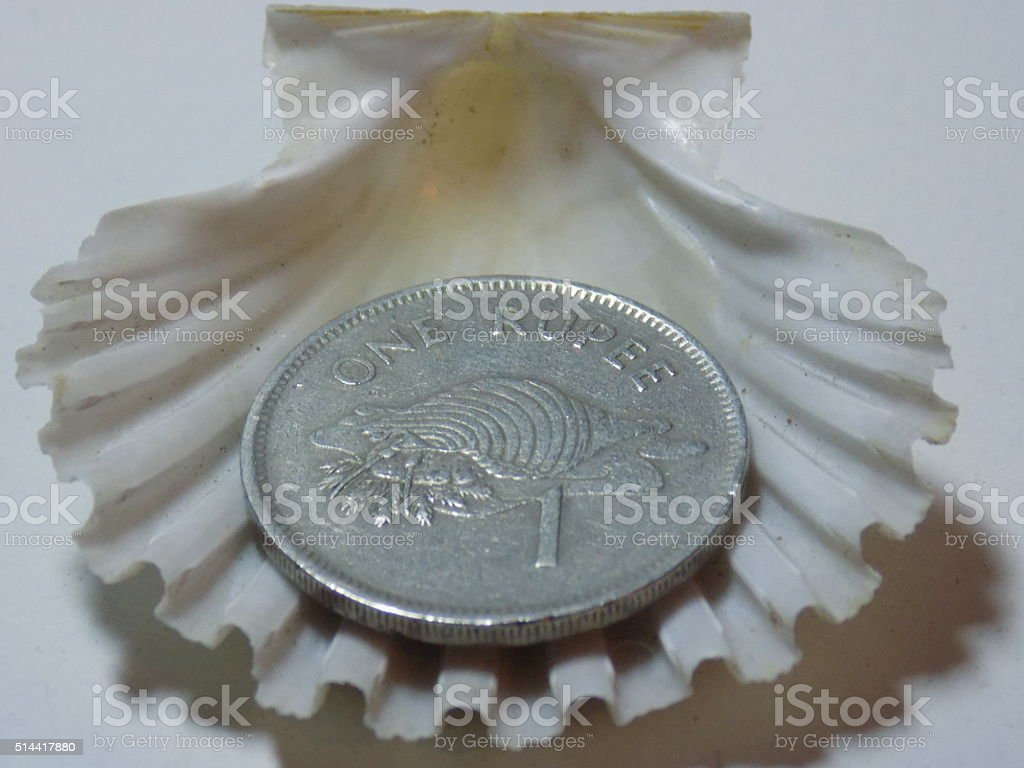 coin in shell stock photo