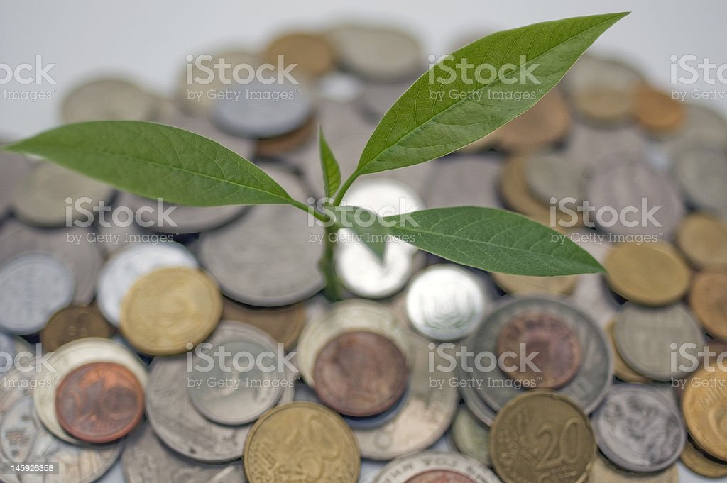 Coins and plant. royalty-free stock photo