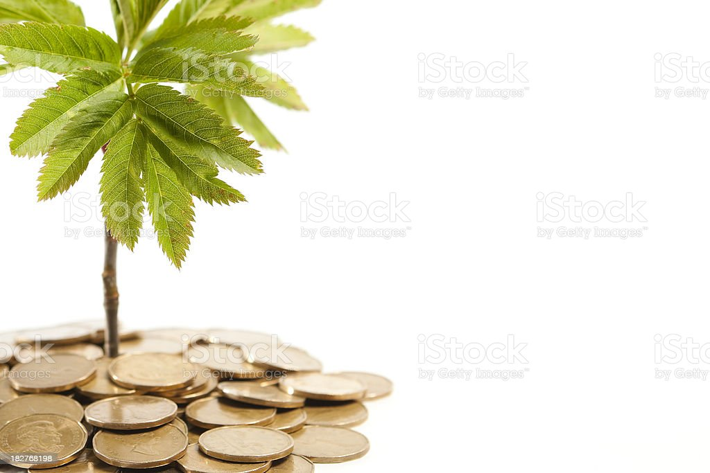Coins and plant royalty-free stock photo