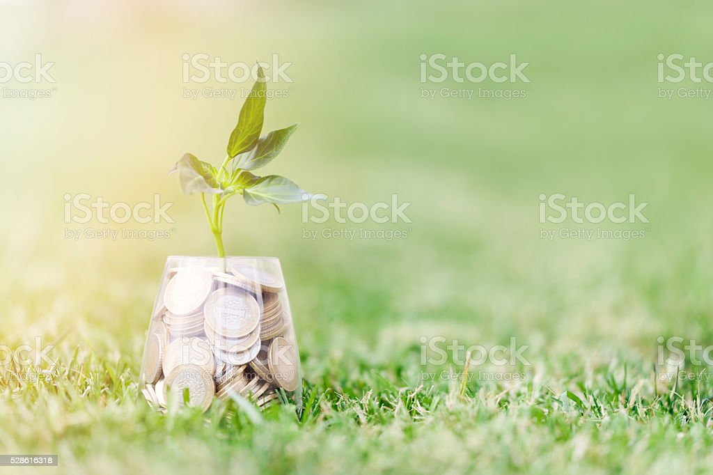 Coins and seed in clear glass on on grass stock photo