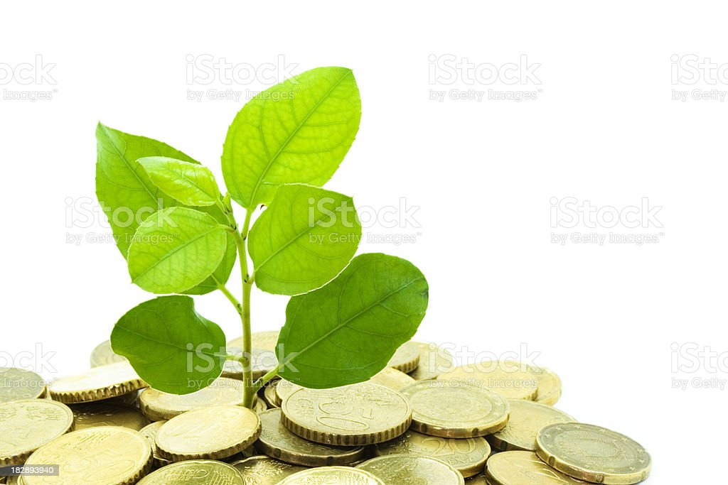 Coins and tree branch - Concept: Investment royalty-free stock photo