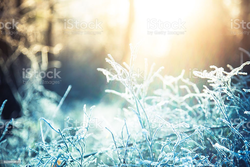 Cold and sunny morning in the woods stock photo