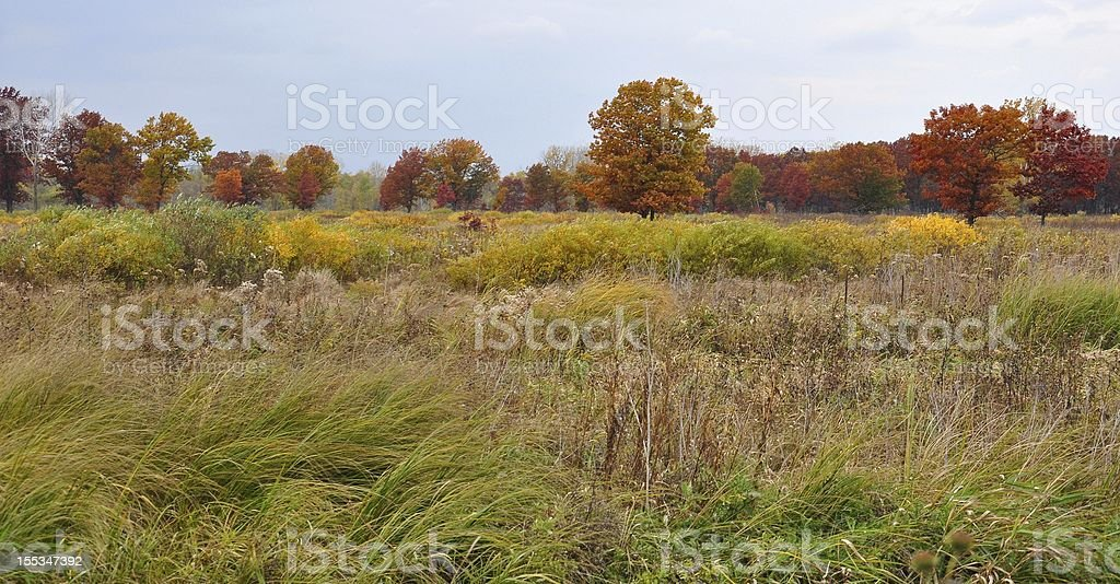 Cold Autumn Day stock photo