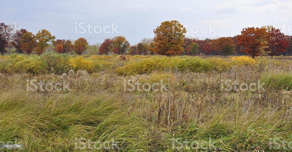 Cold Autumn Day stock photo