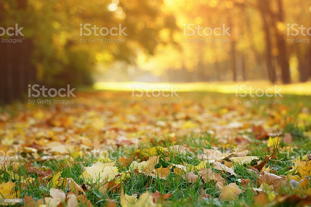 cold autumn morning in town stock photo