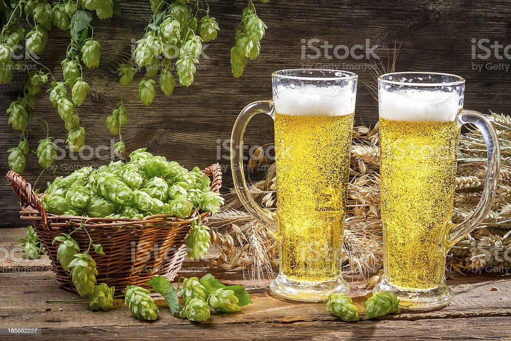 Cold beer surrounded by hops cones royalty-free stock photo