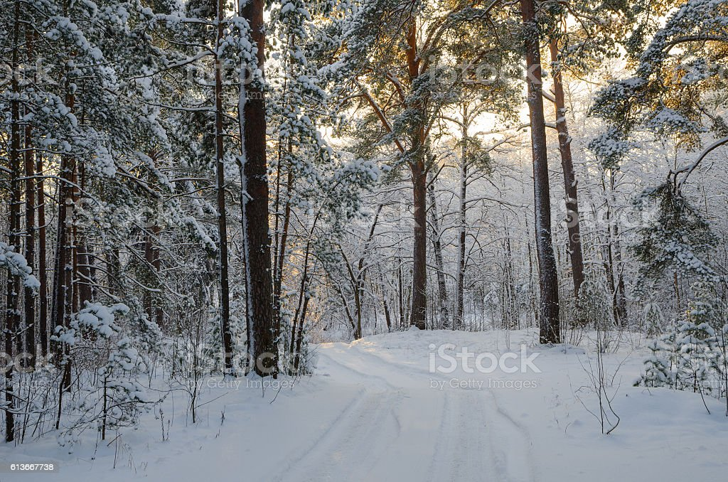 Cold day in  snowy winter forest stock photo