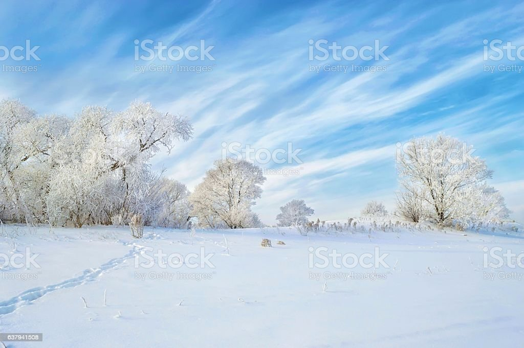 Cold frost and sunshine: day of wonder! stock photo